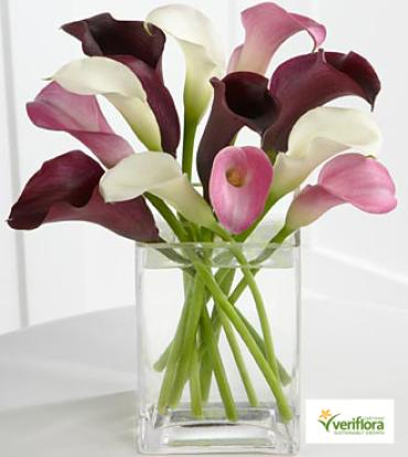 Mini Calla Assorted
