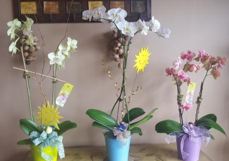 Orchid plants Deal of the day